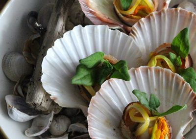 Scallops & Clams